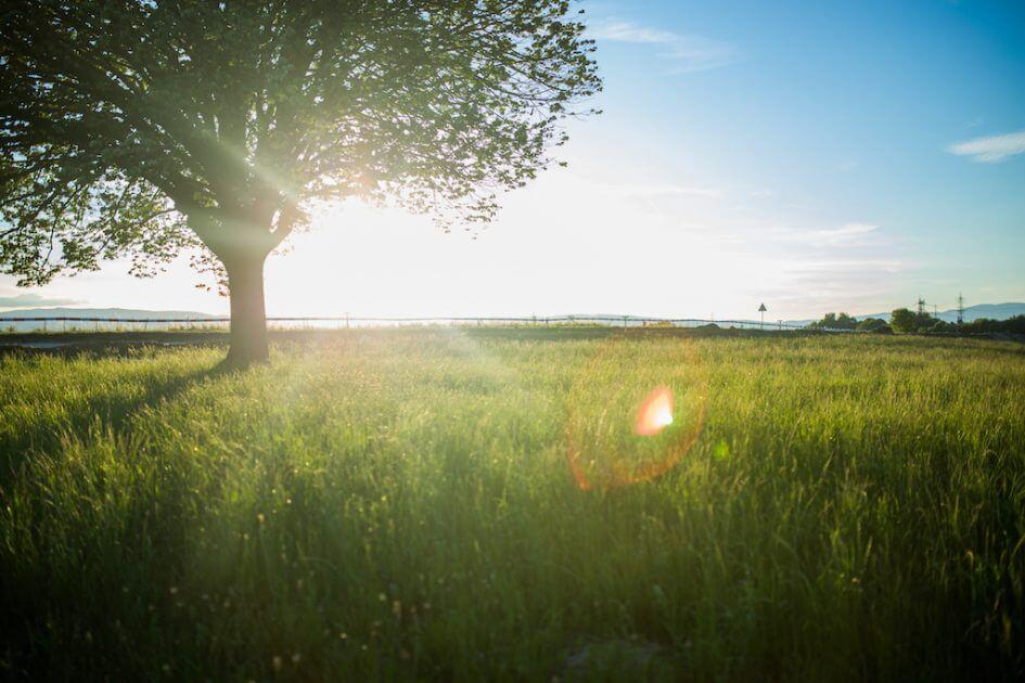 nature-environmental